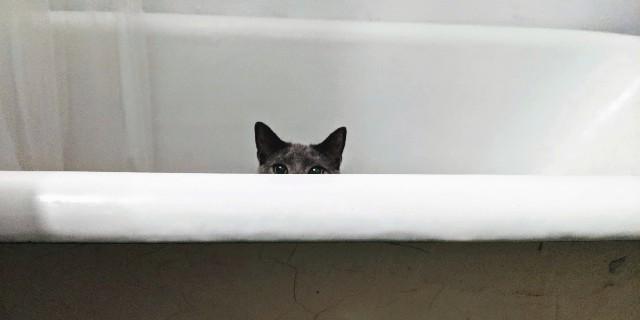como-dar-banho-gato