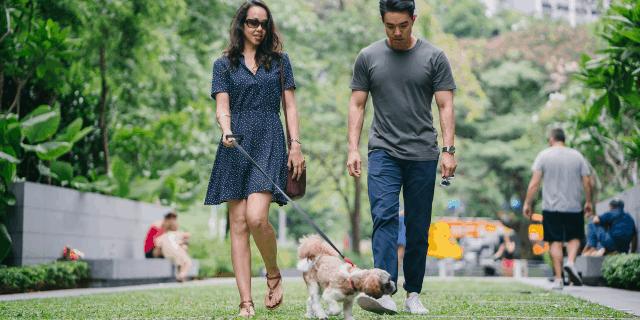 Dicas para passear com cachorro