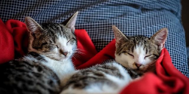 Como fazer dois gatos se darem bem