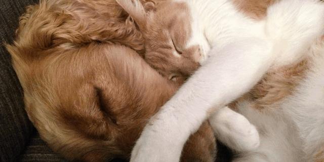 Como fazer gato e cachorro se darem bem