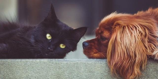 Animais de estimação para apartamento