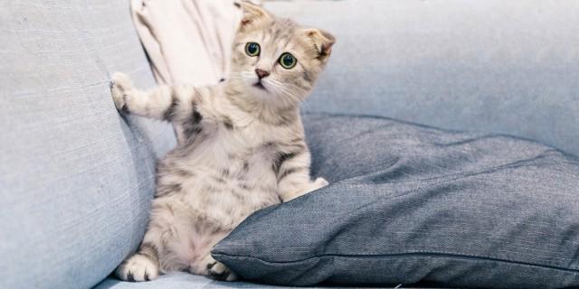 [DICAS] O que fazer para o gato não arranhar o sofá?
