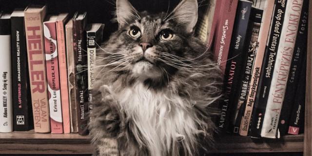 Livros sobre gatos
