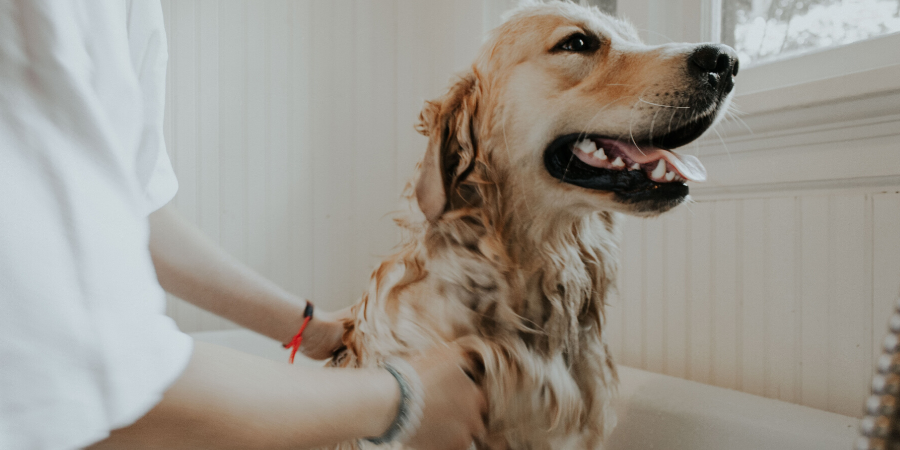 Como divulgar um pet shop nas redes sociais
