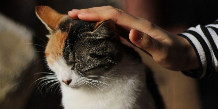 curso online reiki para animais