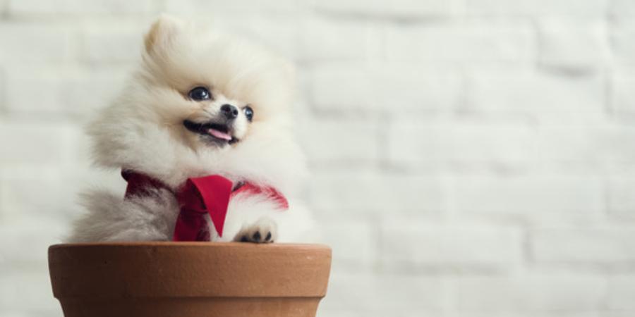 Marketing digital para pet shop