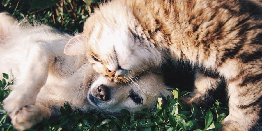 Como fazer cachorro e gato se darem bem