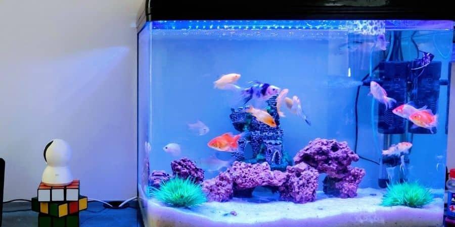 Como montar aquário de água doce