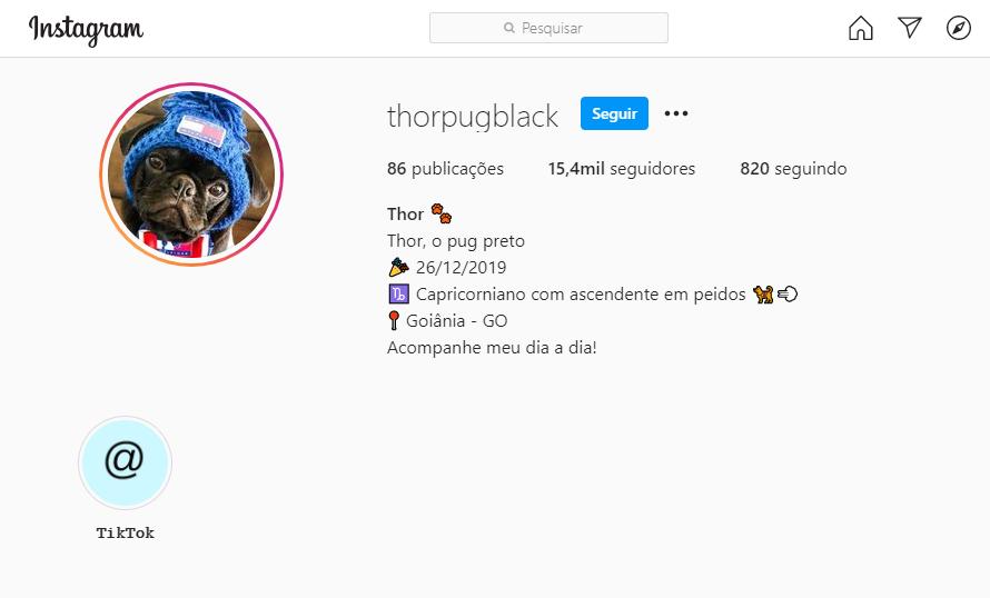 Instagram para cachorros
